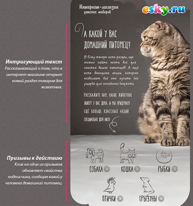 Пример письма интернет-магазина ESKY.ru с вопросом о домашних питомцах